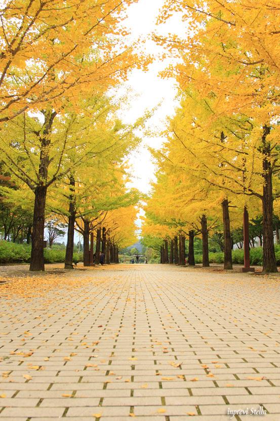 秋の明るい曇り日_d0015026_09275388.jpg