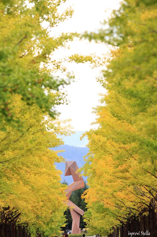 秋の明るい曇り日_d0015026_09284365.jpg