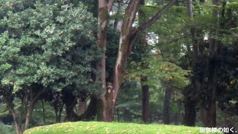 「神様になった日」舞台探訪001 第01話降臨の日 山梨市万力公園周辺ほか_e0304702_08383980.jpg