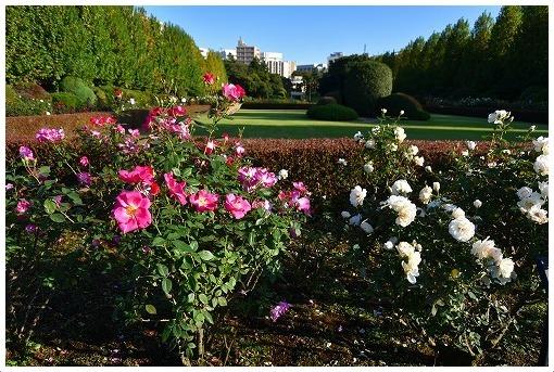 イギリス式庭園でバラを愛でる_a0134114_13520032.jpg