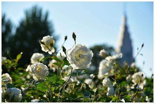 イギリス式庭園でバラを愛でる_a0134114_13524094.jpg