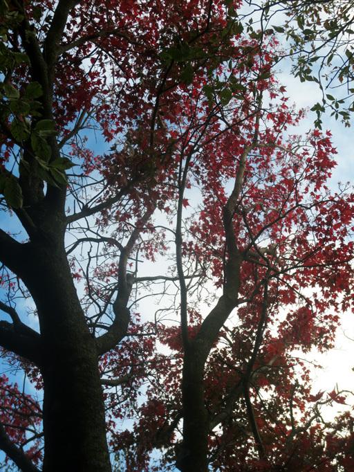■くじゅう大船山・御池の紅葉、そして我ながら前代未聞の……_d0190217_17465210.jpg