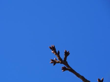 今日のMラさんぽ  秋晴れ!エビの猟場を探しに_c0193627_20010943.jpg