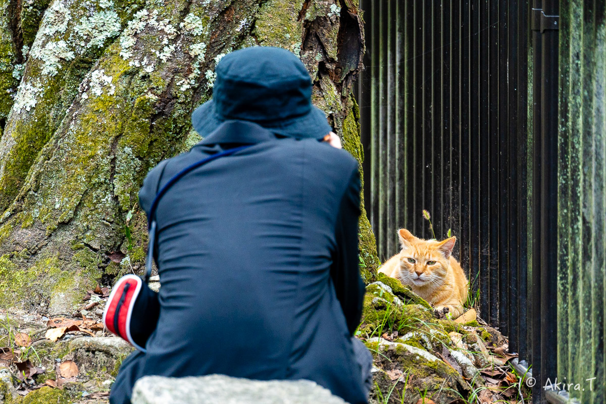 〜岩合光昭に挑戦〜 京都ネコ歩き -24-_f0152550_18325556.jpg
