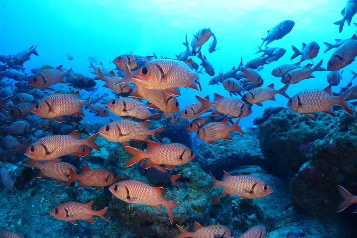 201025   東側にある根魚パラダイスへ!_a0335173_17262765.jpg