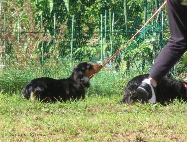 近所の散歩犬_f0067179_14572289.jpg