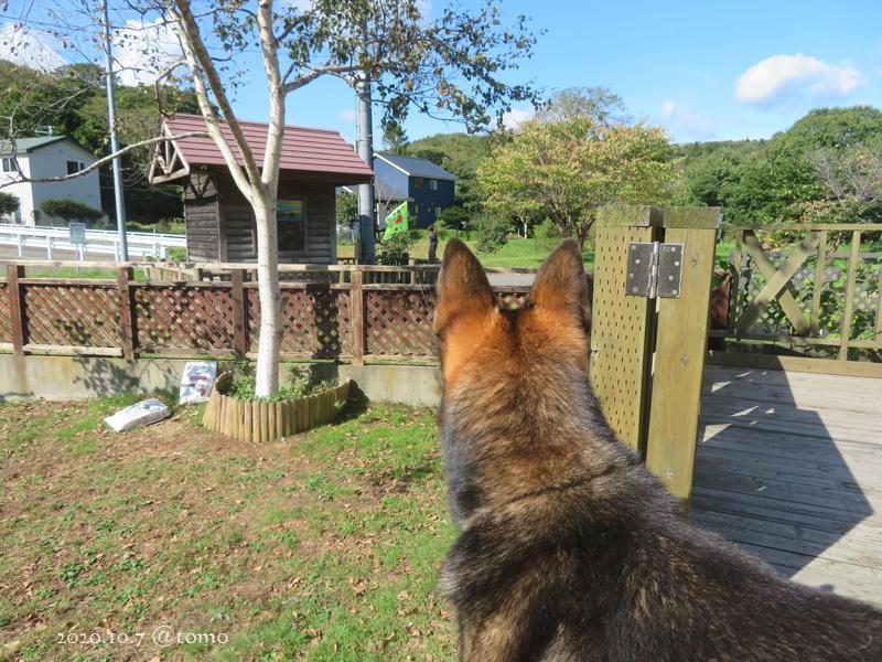 近所の散歩犬_f0067179_14574249.jpg