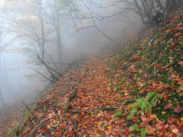 紅葉はおあずけ霧と暴風の明神岳  SOTA#JA/ME-002_f0073587_22582773.jpg