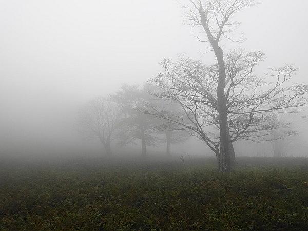 紅葉はおあずけ霧と暴風の明神岳  SOTA#JA/ME-002_f0073587_23514006.jpg