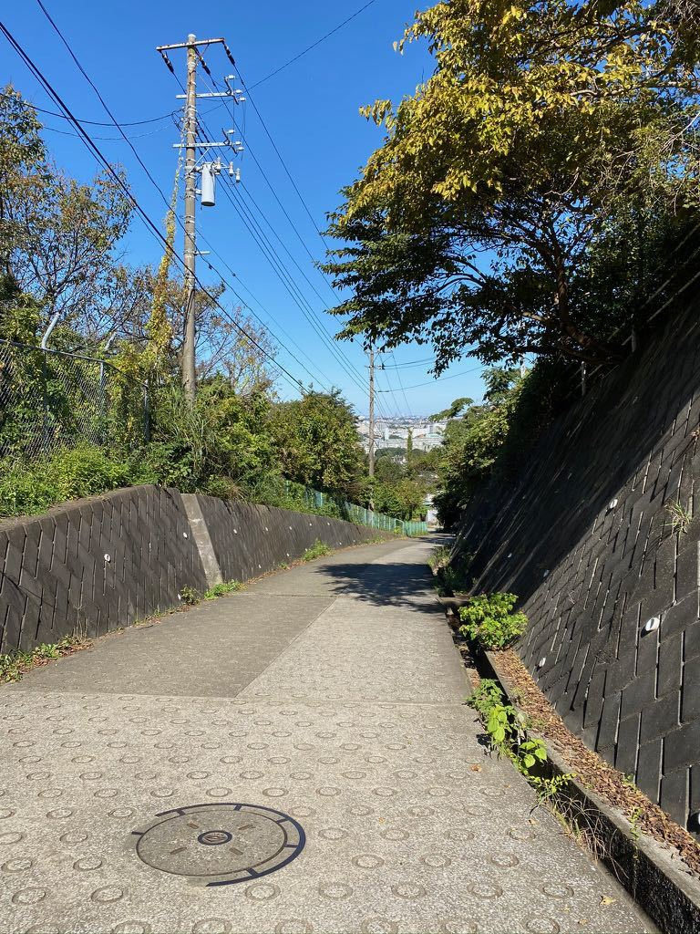 今日は裏山に散歩_f0130894_21131896.jpg
