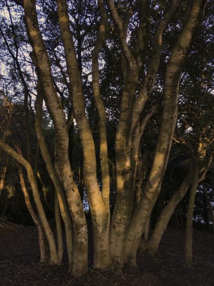 「木の生命力41」_a0096313_11120663.jpg