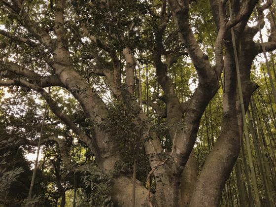 「木の生命力41」_a0096313_11120755.jpg