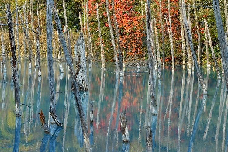 青い池①_f0116528_20233639.jpg