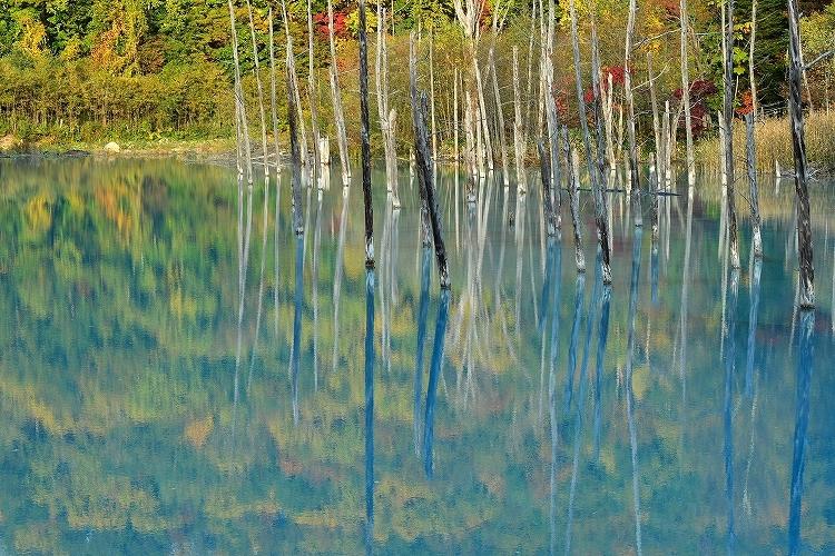 青い池①_f0116528_20234319.jpg