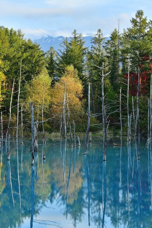 青い池①_f0116528_20234869.jpg