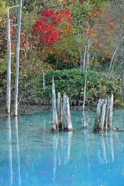 青い池①_f0116528_20235481.jpg