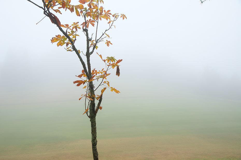 霧の中_c0067040_21034309.jpg