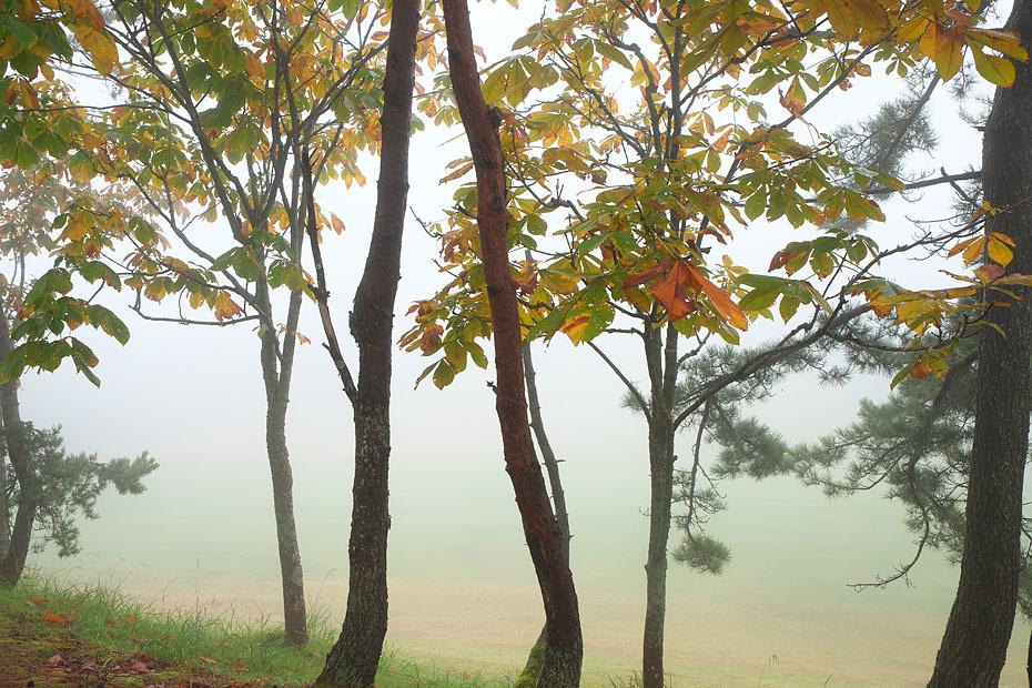 霧の中_c0067040_21040616.jpg