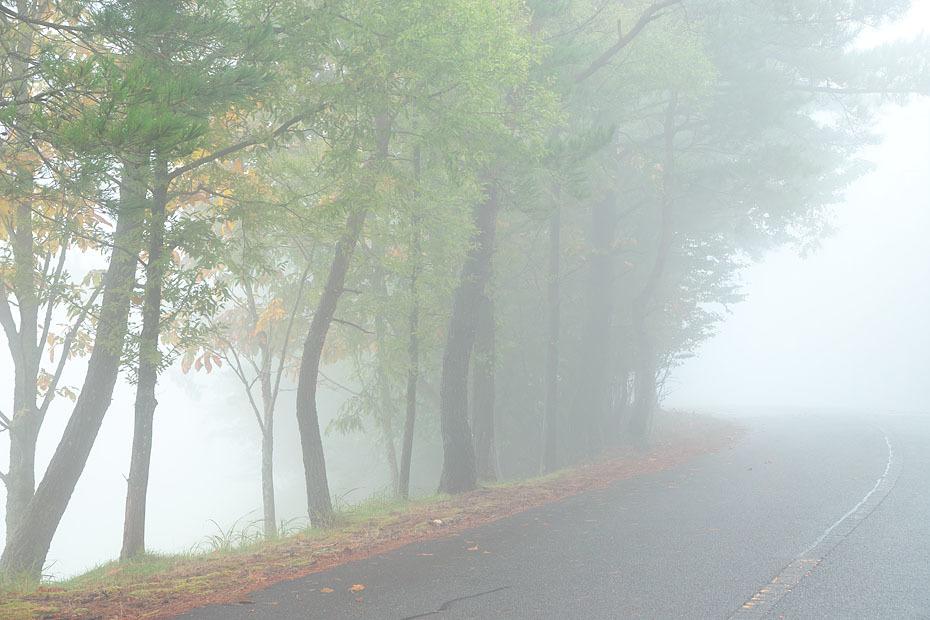 霧の中_c0067040_21042304.jpg