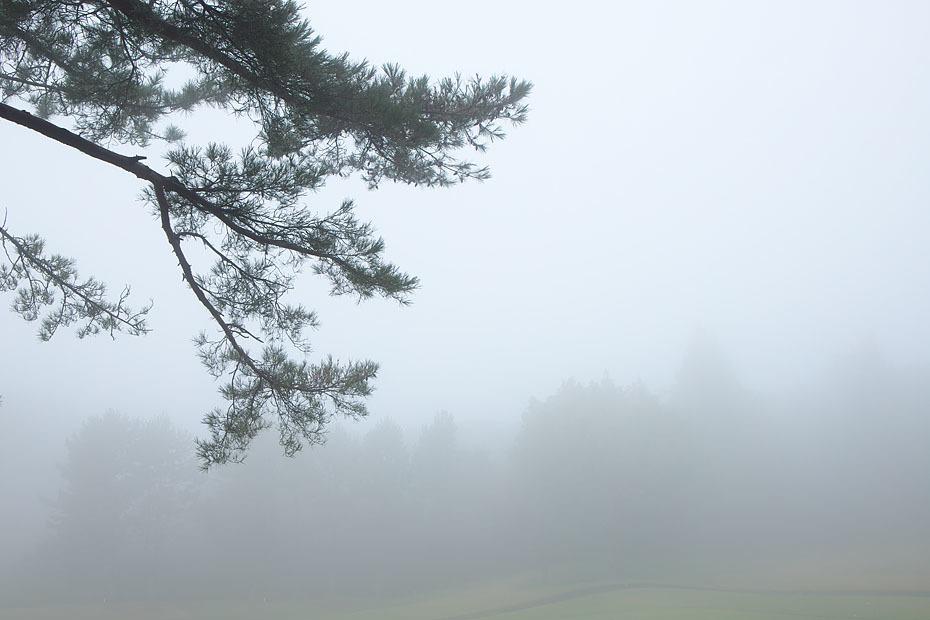 霧の中_c0067040_21043589.jpg