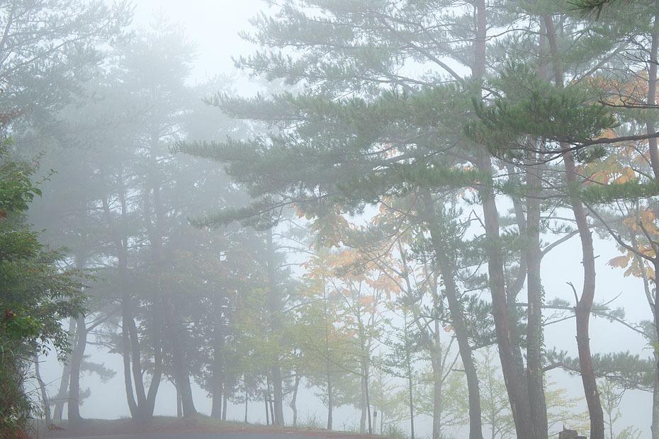 霧の中_c0067040_21044884.jpg