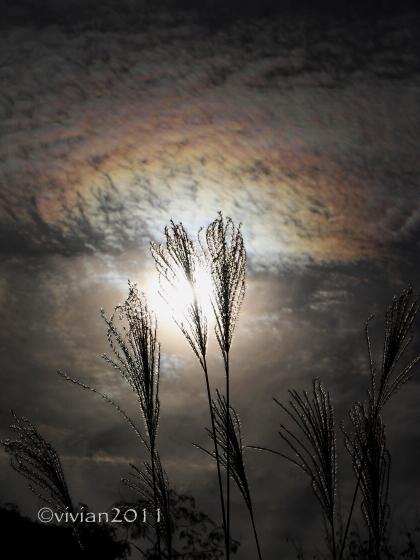 日光 10月の特別撮影会 ~霧降高原の紅葉は今が見頃~_e0227942_22300116.jpg