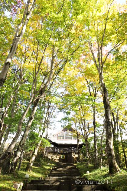 日光 10月の特別撮影会 ~霧降高原の紅葉は今が見頃~_e0227942_22322036.jpg