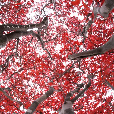 日光 10月の特別撮影会 ~霧降高原の紅葉は今が見頃~_e0227942_22575494.jpg