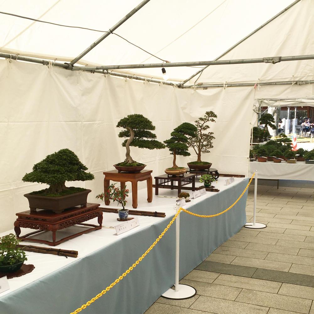「さつき盆栽 錦秋展」は以前も来たことあった_c0060143_21010226.jpg