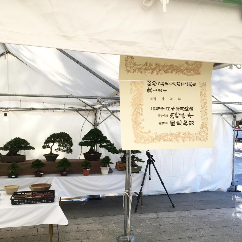 「さつき盆栽 錦秋展」は以前も来たことあった_c0060143_21010505.jpg