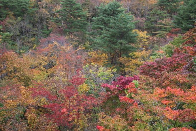 里山の秋と神社めぐり_b0238249_20111104.jpg
