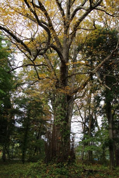 里山の秋と神社めぐり_b0238249_20271352.jpg