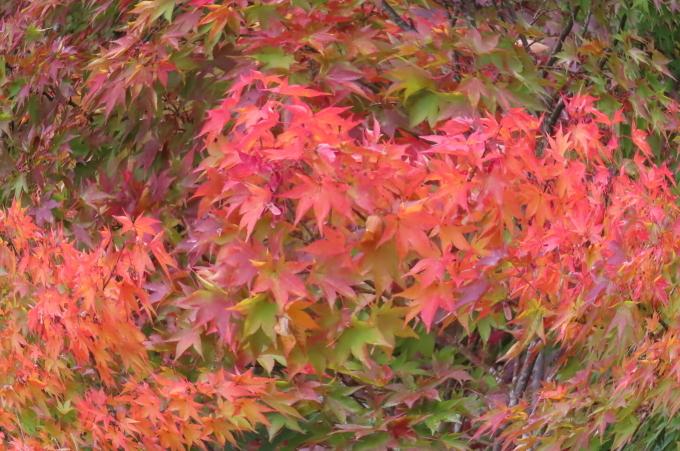 里山の秋と神社めぐり_b0238249_21051089.jpg