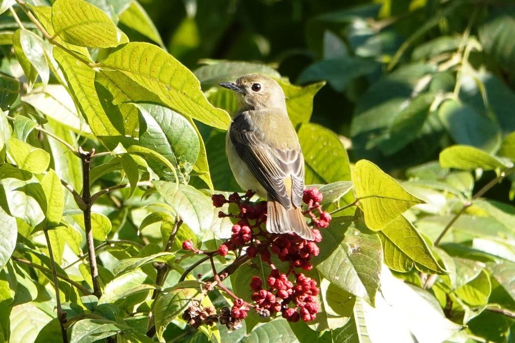 野鳥トレ 228  藍那、森林、藍那三連荘_b0227552_19413348.jpg