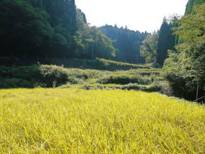 米作りの挑戦(2020) 稲刈りの様子!今年の問題点と来年へむけての課題!(前編)_a0254656_17364555.jpg