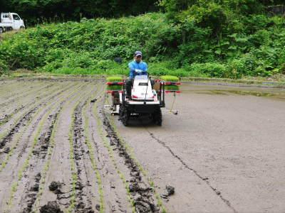 米作りの挑戦(2020) 稲刈りの様子!今年の問題点と来年へむけての課題!(前編)_a0254656_17540210.jpg