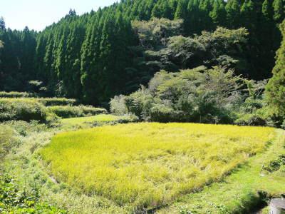 米作りの挑戦(2020) 稲刈りの様子!今年の問題点と来年へむけての課題!(前編)_a0254656_18131309.jpg
