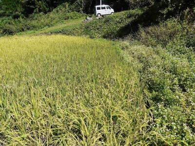 米作りの挑戦(2020) 稲刈りの様子!今年の問題点と来年へむけての課題!(前編)_a0254656_18252416.jpg