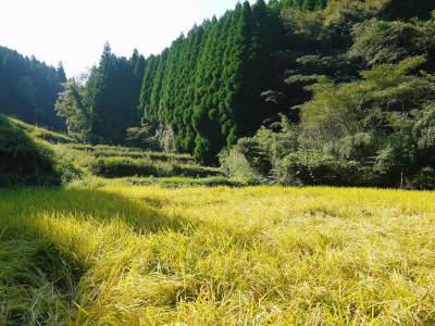米作りの挑戦(2020) 稲刈りの様子!今年の問題点と来年へむけての課題!(前編)_a0254656_18540330.jpg