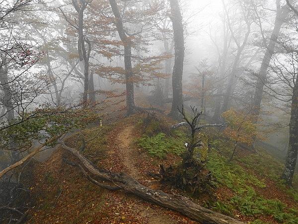 紅葉はおあずけ霧と暴風の明神岳  SOTA#JA/ME-002_f0073587_00500194.jpg