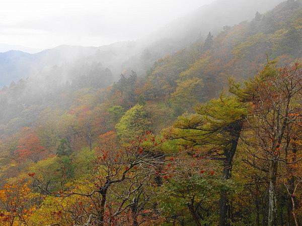 紅葉はおあずけ霧と暴風の明神岳  SOTA#JA/ME-002_f0073587_00532597.jpg