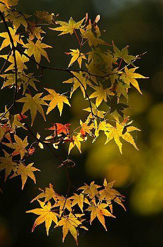 青井岳の紅葉_f0360801_20422161.jpg