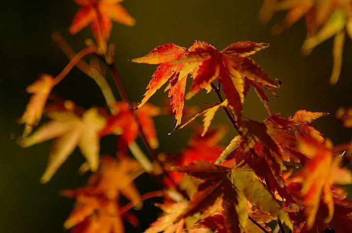 青井岳の紅葉_f0360801_20423802.jpg