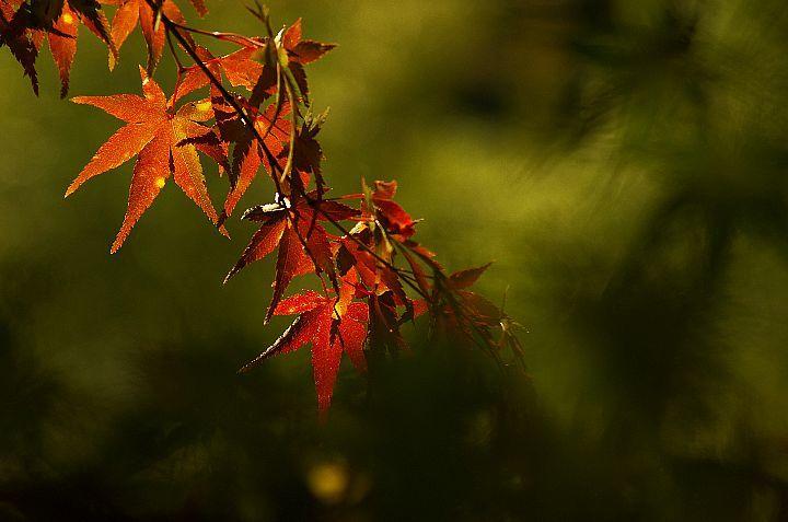 青井岳の紅葉_f0360801_20430484.jpg