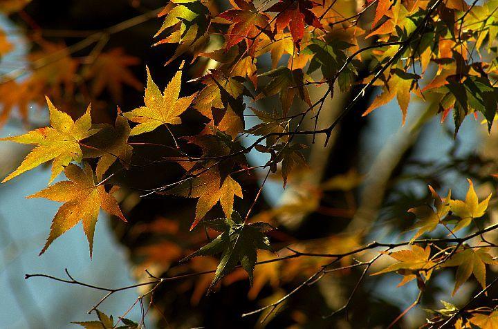 青井岳の紅葉_f0360801_20432359.jpg