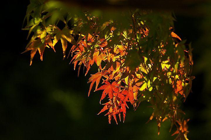 青井岳の紅葉_f0360801_20435328.jpg