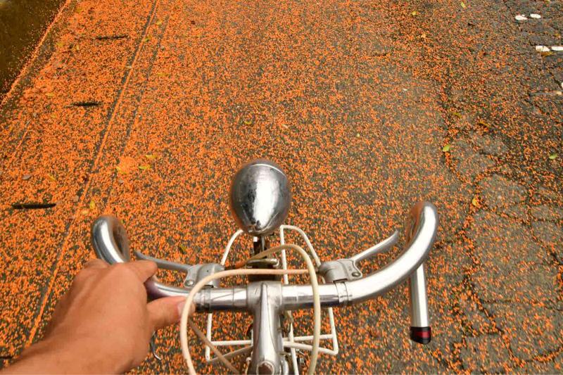 Moulton Sunday Ride in Wakui museum 続き_b0223512_14444715.jpg