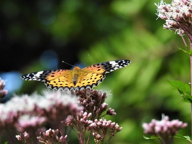花と蝶~♪_f0354923_21301158.jpg