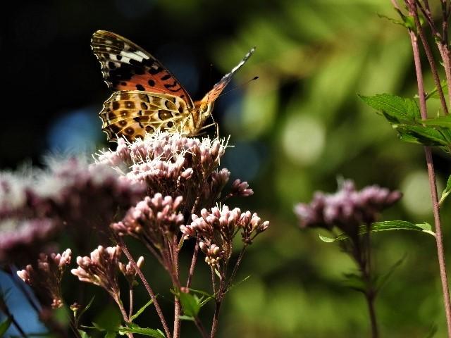 花と蝶~♪_f0354923_21303531.jpg