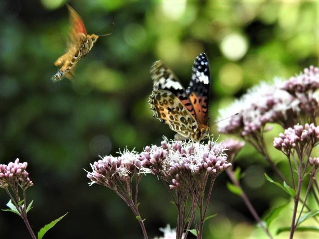 花と蝶~♪_f0354923_21315322.jpg